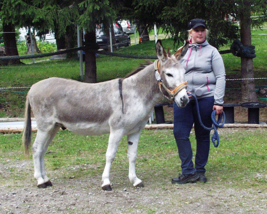 Krusborgs Don Quijote